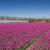 Elektriciteitsnet regio Holland Rijnland wacht flinke verbouwing